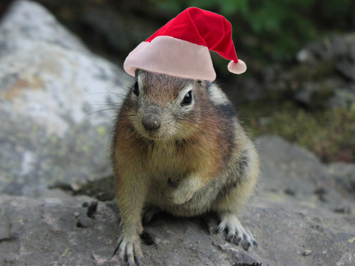 Chippy Claus