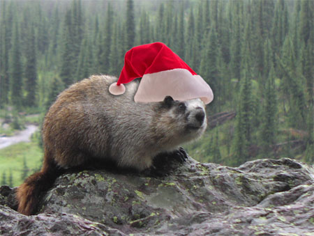 Merry Christmas from the marmots